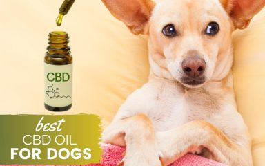 6 A Lot More Causes To Be Delighted Regarding Cbd Oil For Pets